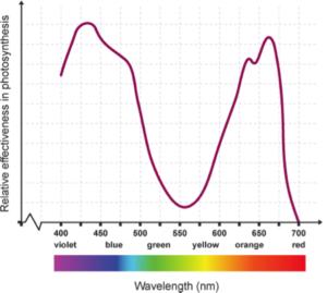 photosynthetically active spectrum
